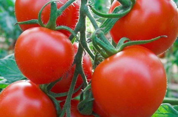 tomatele