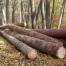 Fordaq avertizeaza asupra amplificarii blocajelor si nemultumirilor din sectorul forestier