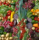 legume eco