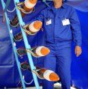 rachete-1