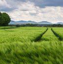 agricultura_verde