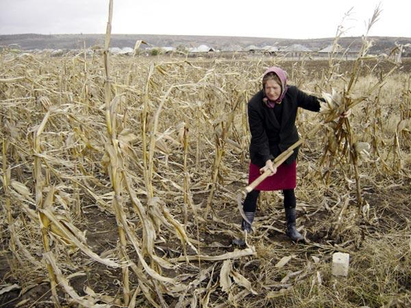Fermierii: impozitul agricol ii va extermina pe micii agricultori