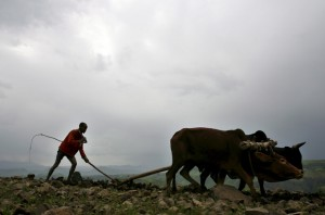 A farmer at work in the field