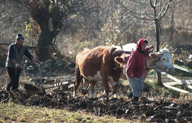 Fermierii acuză: Mafia consultanților ne vămuiește de 30% din fondurile europene