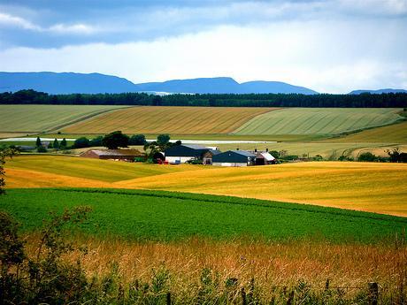 Societatea Inginerilor Agronomi: adoptați urgent legi pentru stoparea vânzării pământului către străini