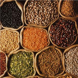 O nouă directivă europeană vrea să interzică seminţele tradiţionale ale ţăranilor. Doar cele ale marilor companii vor fi permise