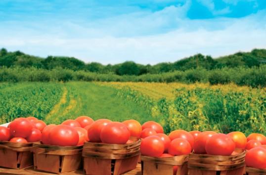 Subvenție de 600 euro pentru agricultura bio