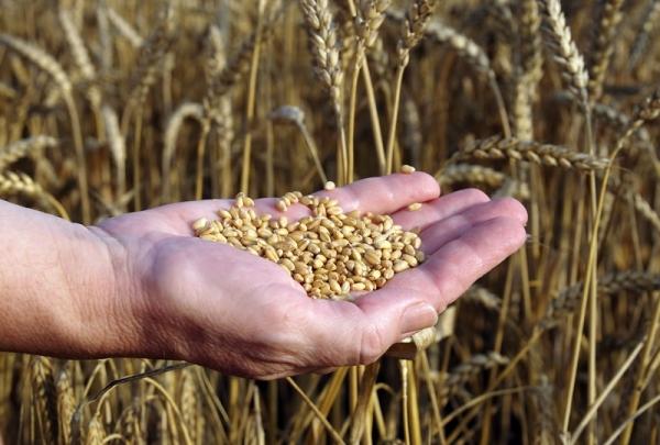 Fermierii nu ies pe profit nici in anii cu productii record. Traderii, ca de obicei, da