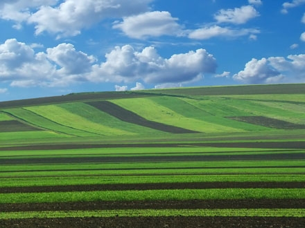 Străinii deţin un sfert din terenurile agricole. Procesul de preluare continuă