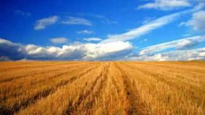 terenuri_arabile_straini