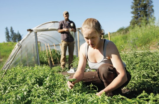 Dezinteresul tinerilor pentru agricultură, cea mai mare provocare a viitorului