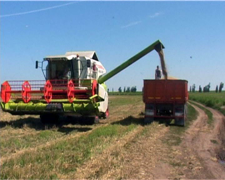 Cat primesc fermierii pentru productia de cereale? Cat ar trebui sa fie preturile pentru a fi profitabili?