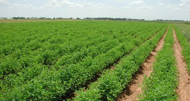 STUDIU DTZ Echinox. Preţurile terenurilor agricole au urcat cu 60% în doi ani, dar sunt inca la cotatii ridicole fata de restul Europei