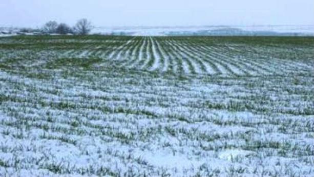 Fermier din Timis: Deficitul de apa din sol este semnificativ, in ciuda ninsorilor