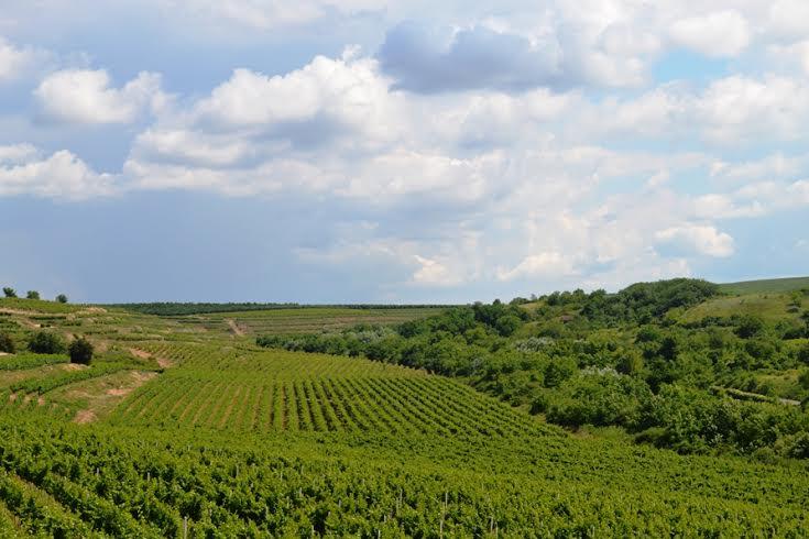 Centru Transfrontalier de Oenologie și Viticultură româno-bulgar, un proiect de peste 1,5 milioane de euro