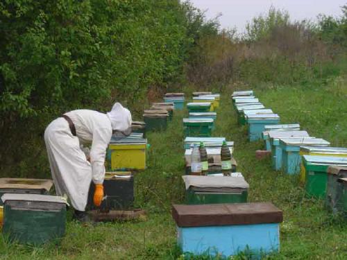 Adrian Siceanu, director ştiinţific Institutul de Cercetare-Dezvoltare pentru Apicultură: Avem o diversitate a soiurilor de miere unică în Europa