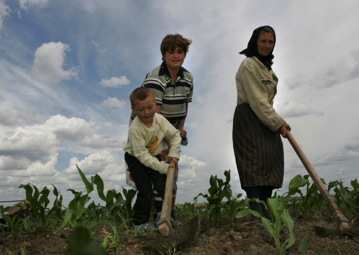 Agricultura performantă, fără industrie procesatoare – şomaj şi sărăcie pentru populaţia rurală