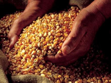 Bursă de cereale la București