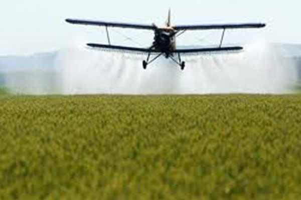 Grâul de panificație ar putea conține substanțe cancerigene