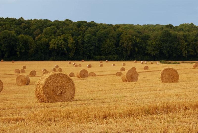 Paiele, superafacere pentru fermieri