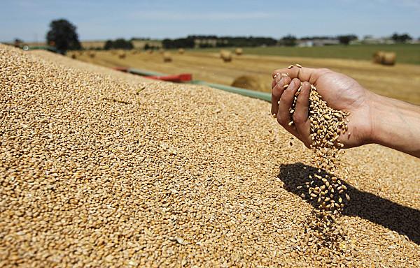 Fermier cu 350 hectare din Vaslui: Cand n-ai bani, nici trocul nu merge…