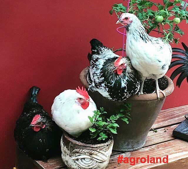 Agroland are planuri de extindere la nivel regional