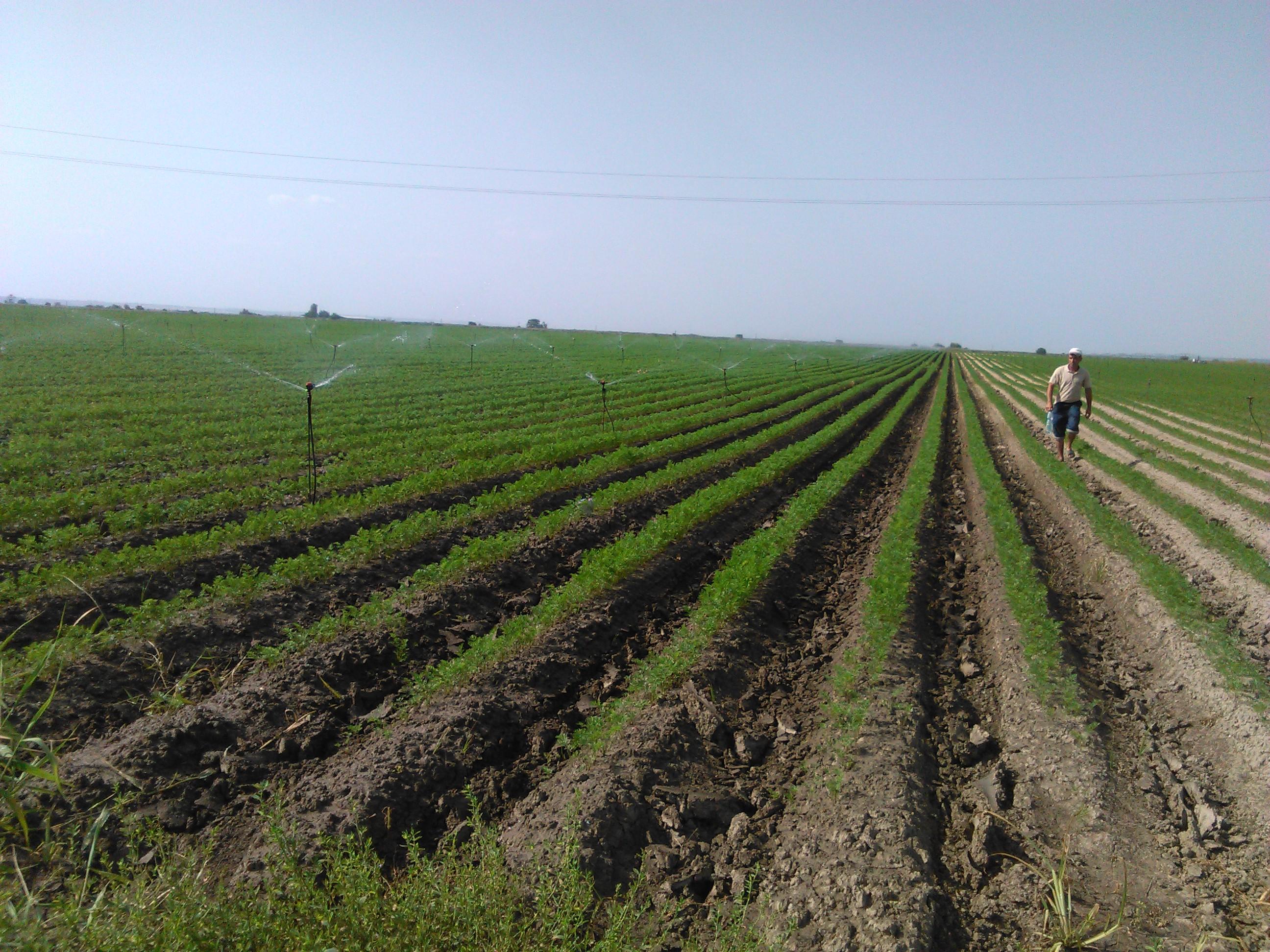 Efectul TVA de 9% la input-uri si servicii agricole? Probabil zero sau aproape zero