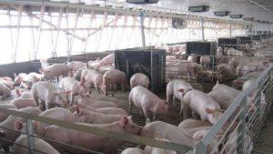 porc_carne