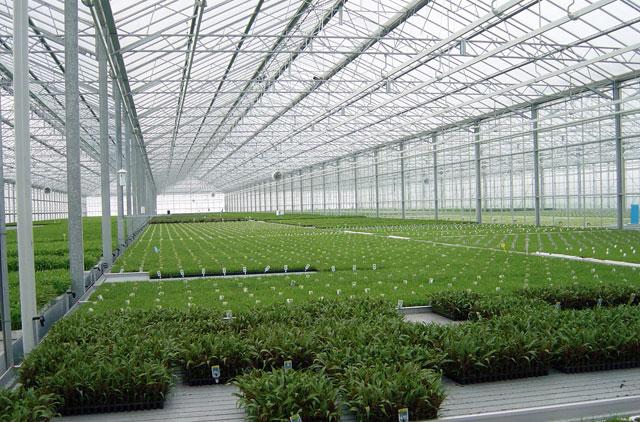 Exclusiv AgroStandard: Romania are doar 323 hectare de sere