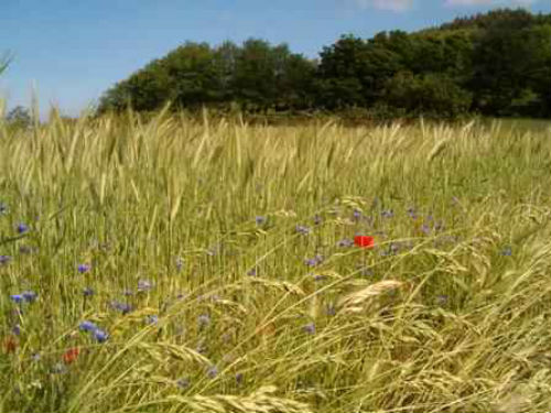 Piata alimentara bio, avans de cinci ori in ultimii 15 ani. Romania, pe locul 2 in lume la floarea soarelui