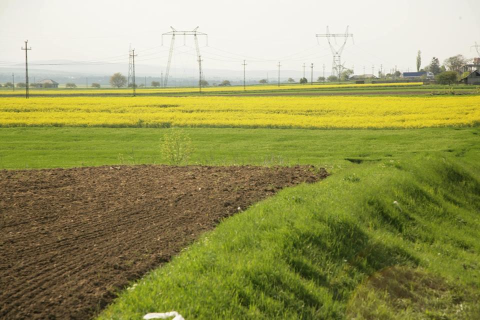 66 proiecte depuse pe submasurile pentru cooperare in sectorul agricol si pomicol