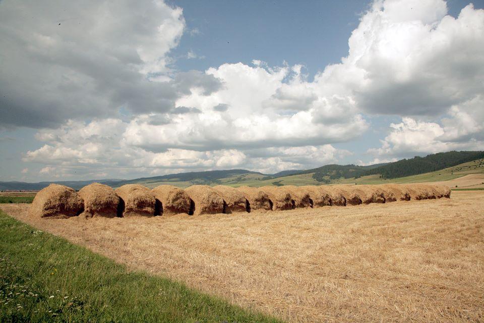 PwC: Fermele de peste 100 ha reprezinta 0,5% din total si lucreaza 49% din suprafata agricola