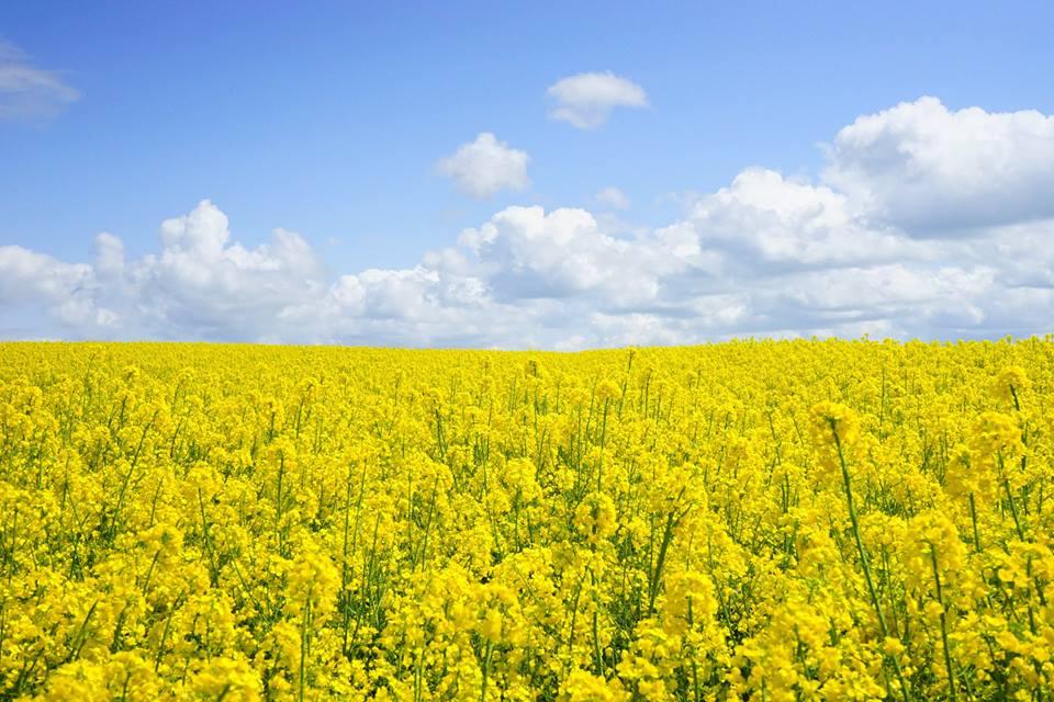 Gheorghe Tuzu, fermier Buzau: O ferma este rentabila cu 500 ha, maximum. Profitul poate ajunge si la 2.500 lei/ha