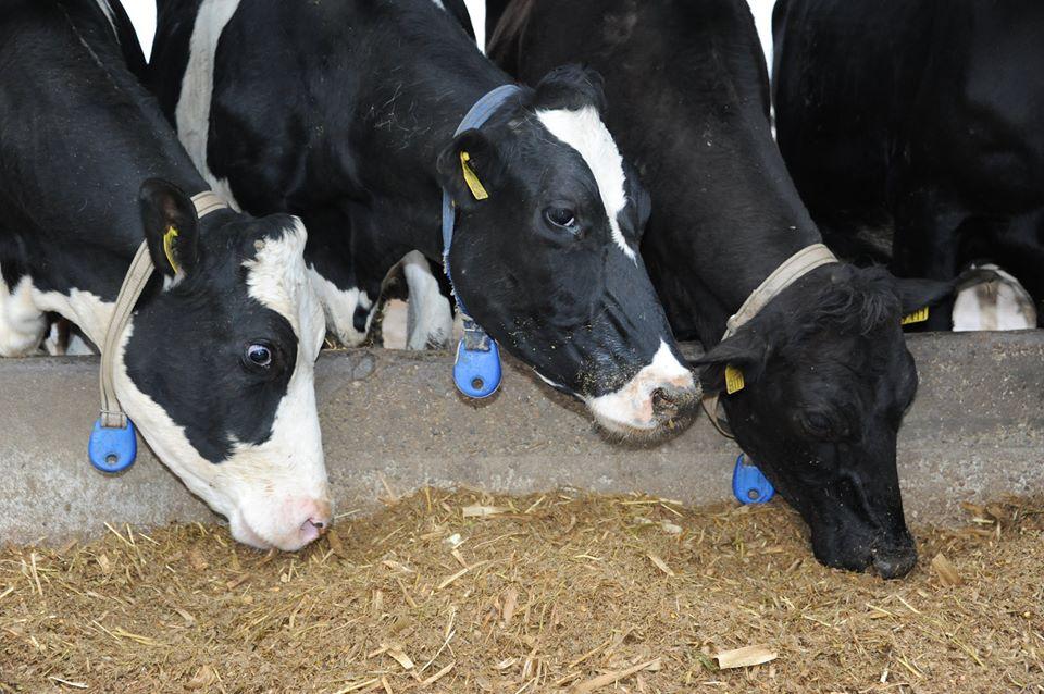 Laptele frantuzesc este cel mai scump din lume?!