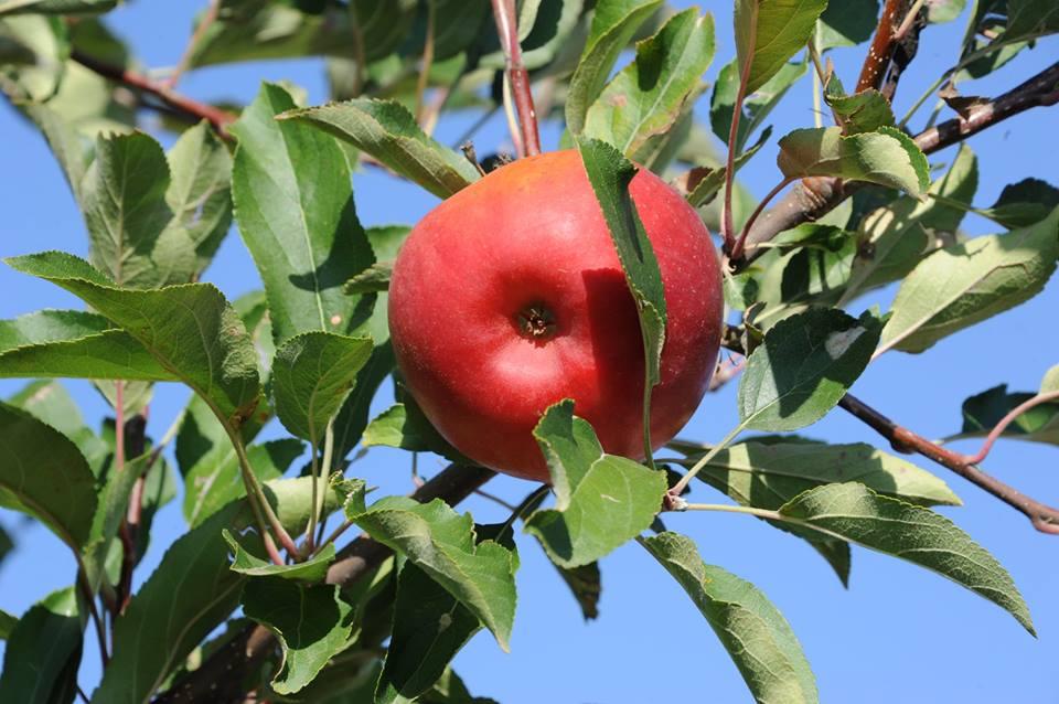APIA: Cuantumurile schemelor de sprijin cuplat in sectorul vegetal pentru Campania 2016