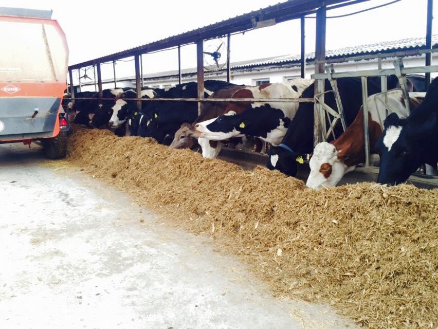 Sprijin financiar pentru micii producatori de lapte (3-9 vaci)