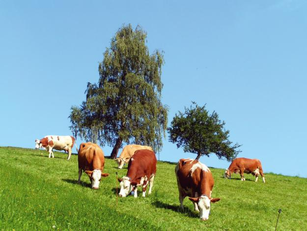 Zoltan Haller despre exportul de vaci in China: Esec total