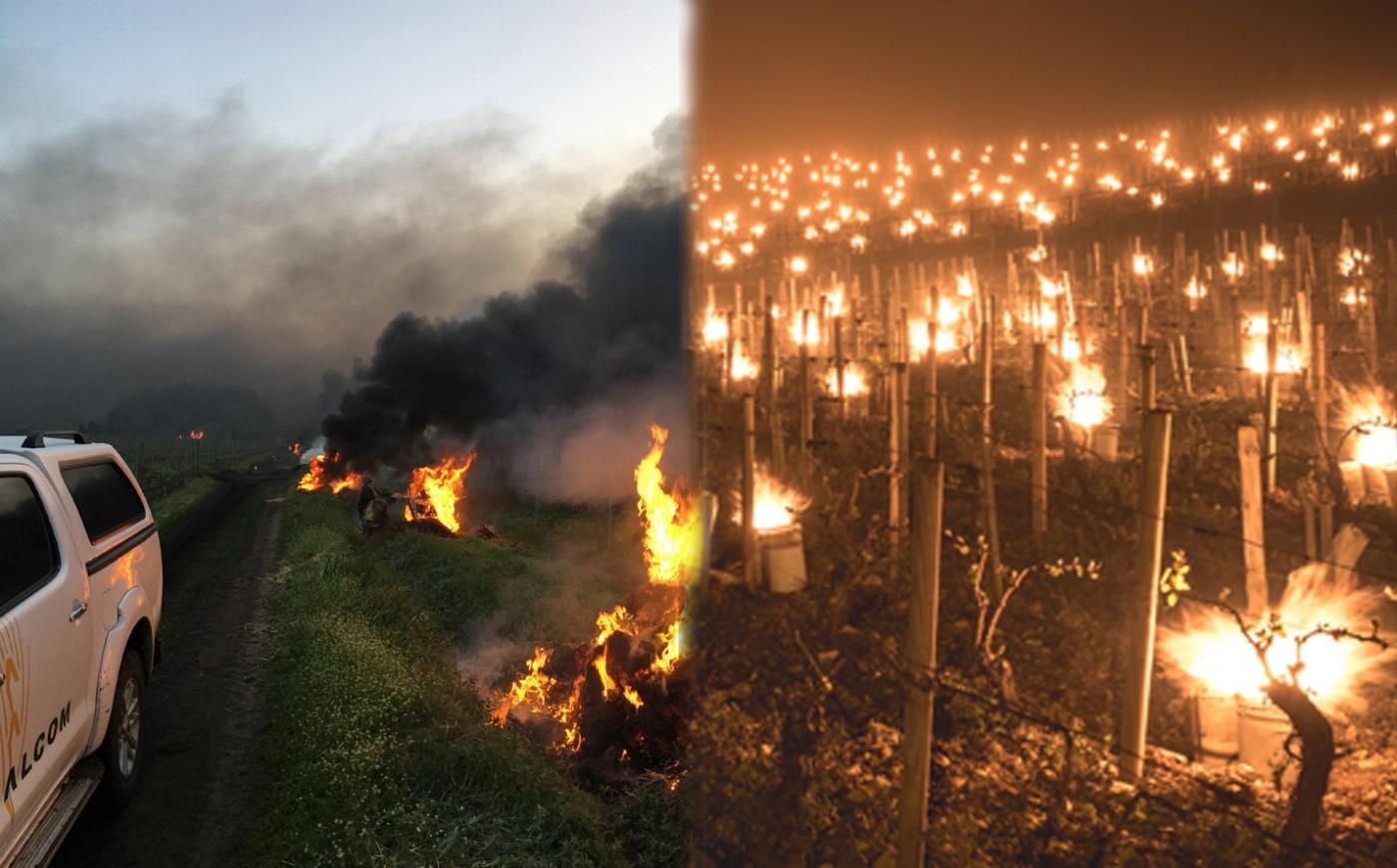 Noapte alba la Domeniul Coroanei Segarcea. 300 de oameni au aprins focuri pentru a salva 300 ha de vie