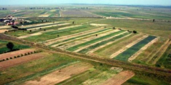 In IMB s-a redus consumul de pesticide cu 20%. Secretul: apa dedurizata