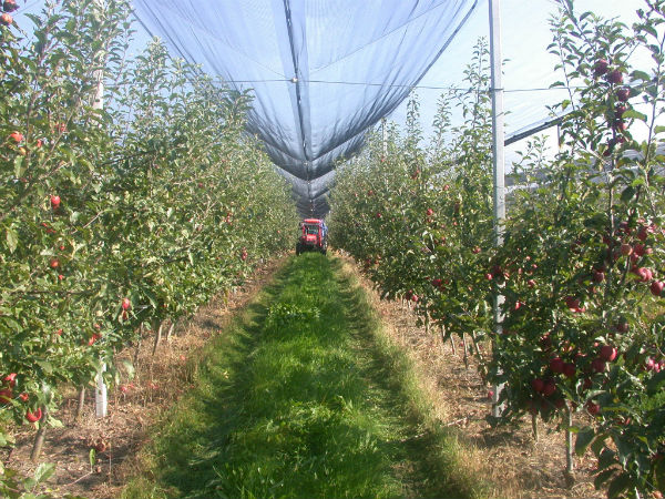 Gh. Glaman, ASAS: Este prima data dupa 1989, cand in Romania se infiinteaza 2.000 ha de plantatii de pomi pe an