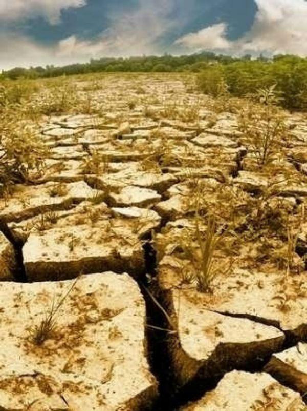 Fermieri, nevoiti sa dea inapoi despagubirile la seceta din 2015. Bonus, si penalitatile