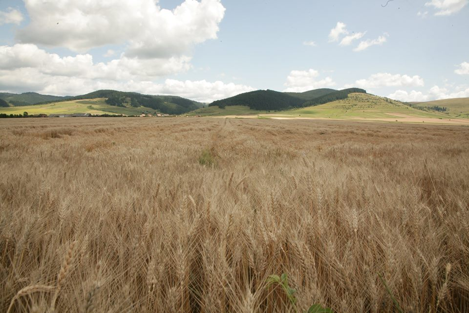 Fermier: Pana si in Siberia mi-ar fi fost mai usor, decat sa fac agricultura in Romania