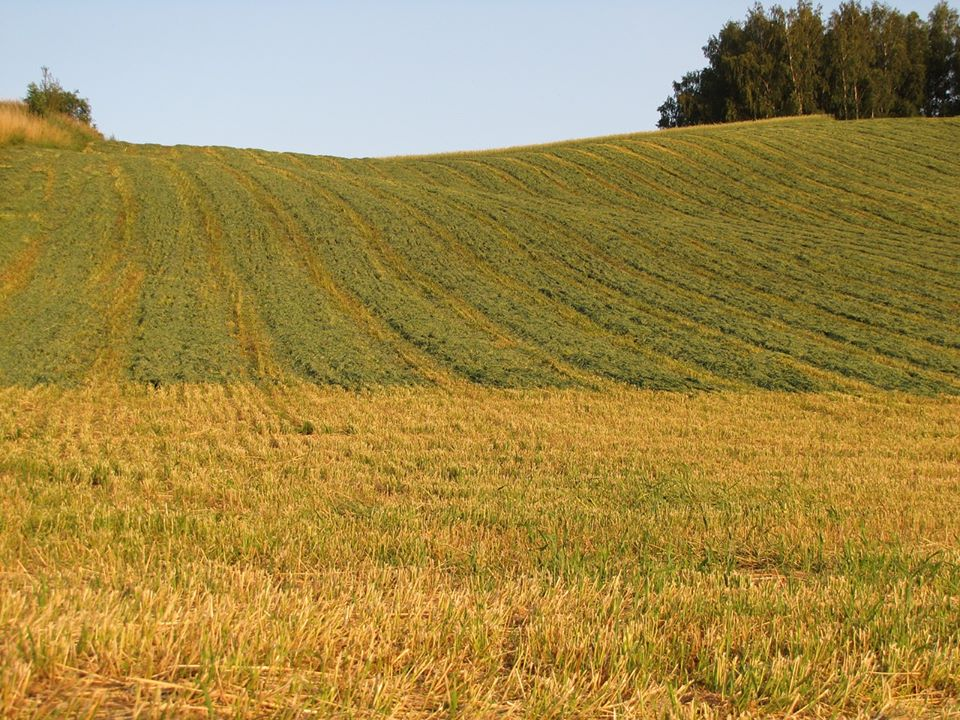 """AFIR: Fondurile pe submasura 4.1 """"Investitii in exploatatii agricole"""", epuizate"""