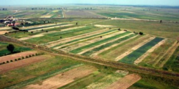 IMB, cea mai mare exploatatie agricola din Romania, exporta 80% din productie