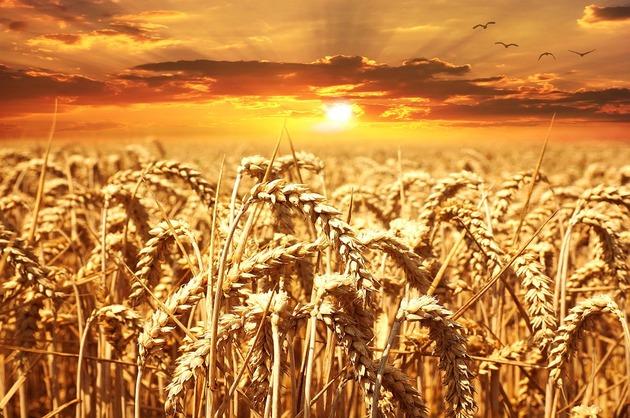 PRO AGRO: Preturile la cereale scad fara nicio justificare. Calitatea trebuie platita!