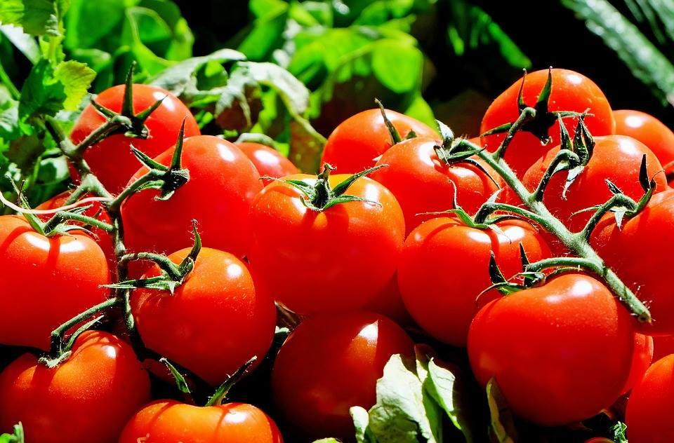 Inca 906 legumicultori au depus cereri pentru banii din programul tomate romanesti