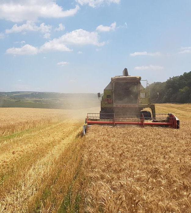 Fermier: Traderii schimba si de trei ori pe zi pretul la cereale