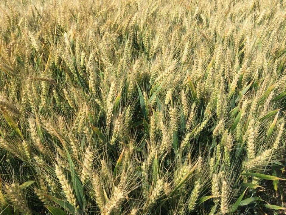 Caras-Severin si Tulcea, judetele cu cele mai mari suprafete cultivate ecologic. Peste 40.000 hectare, fiecare