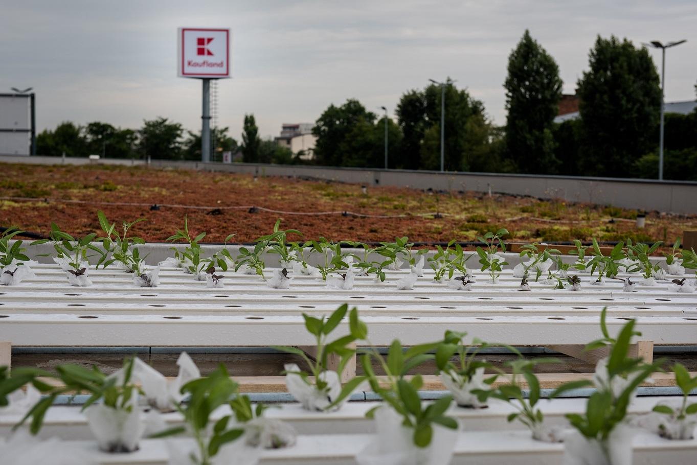 Kaufland lanseaza Gradinescu, prima retea de gradini urbane comunitare