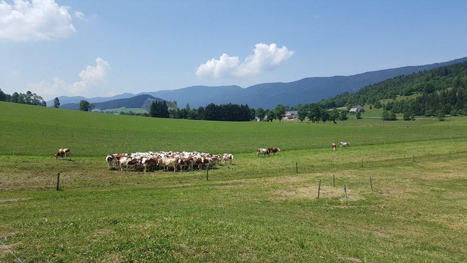 Terenurile cultivate ecologic reprezinta doar 6,2% din suprafetele agricole din Europa